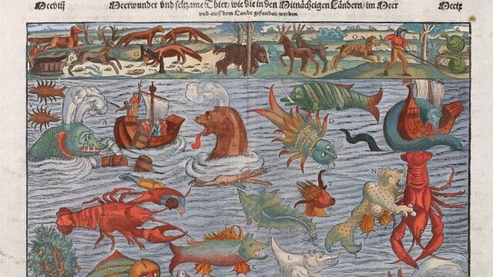 Link zum Arbeitsblatt Sonderbare Wesen aus dem Meer
