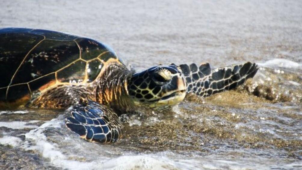 Link zum Arbeitsblatt Die kleine Schildkröte und das große Schiff – eine Filmsequenz unter der Lupe