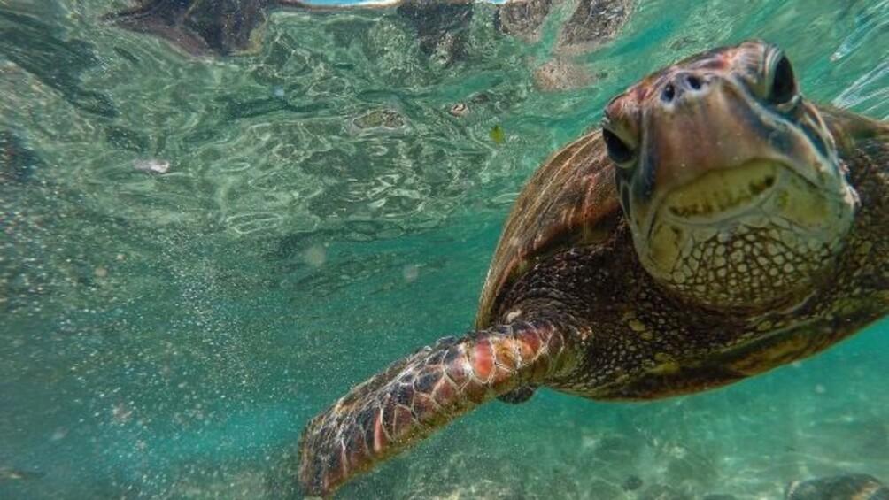 Link zum Arbeitsblatt Schildkröten reisen seit Millionen von Jahren durchs Meer – ihre größte Bedrohung heute ist der Mensch