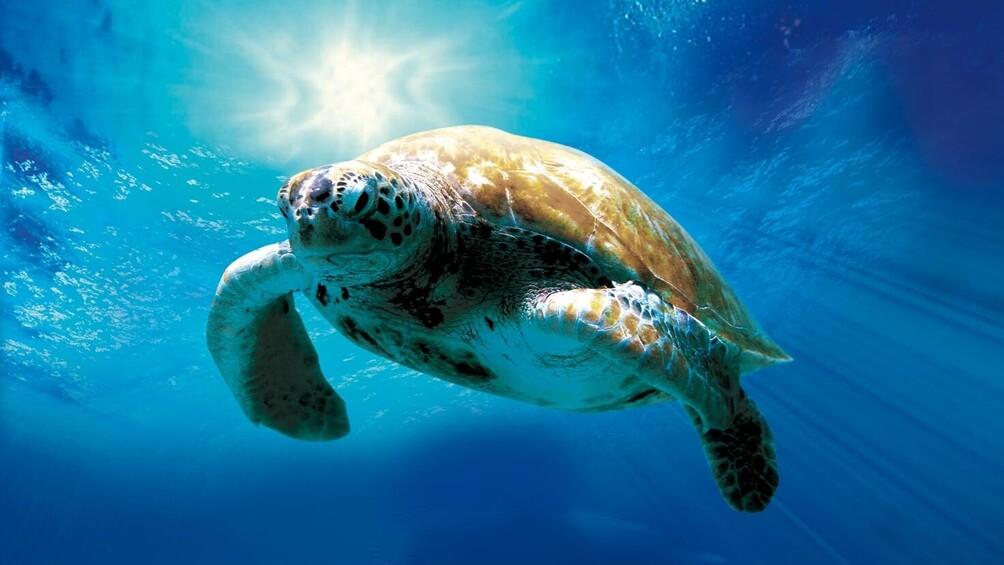 Link zum Arbeitsblatt Was weißt du über Schildkröten?