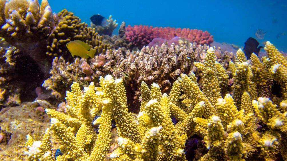 Link zu Station 1a) Dories Zuhause: Ein Korallenriff