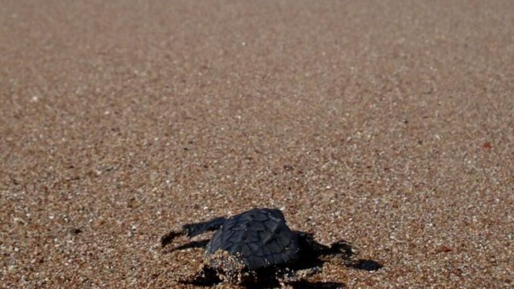 Link zum Arbeitsblatt Der Reiseplan der Schildkröte II