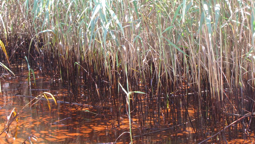 Link zum Arbeitsblatt Uta Passow: Das Unglück – ökologische Folgen für den Golf von Mexiko
