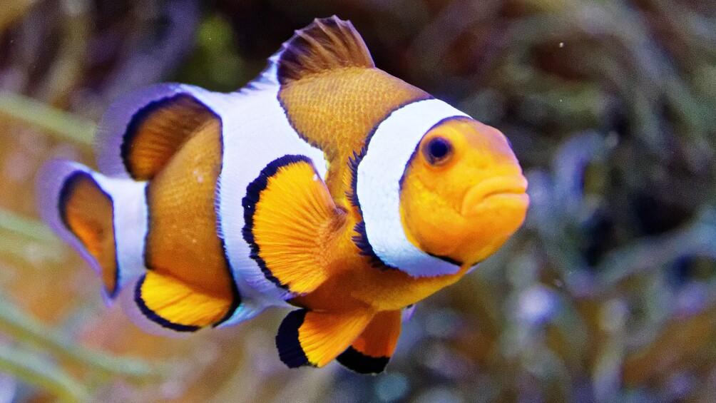Link zu Station 4) Marlin und Nemo – Clownfische